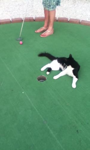 ちょっと困るんだけど、どうしても憎めない…ゴルフを邪魔する動物たち
