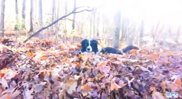 これ絶対楽しい! 落ち葉の山でメチャクチャはしゃぎまくるワンコたち
