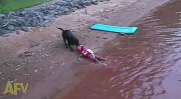 【どうみても遊びの延長線】人の気持ちなどお構いなし! 子供を水中からズルズル引きあげる犬
