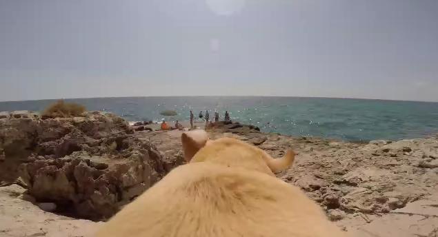 【海が好き】これが犬視点かあ! 猪突猛進で走って海にダイブするラブラドール