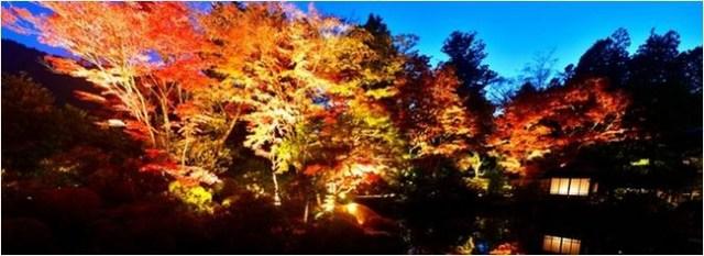 【ライトアップは11/15まで】この秋は世界文化遺産登録15周年を迎える「日光山輪王寺 逍遥園」の紅葉を見に行こう♪