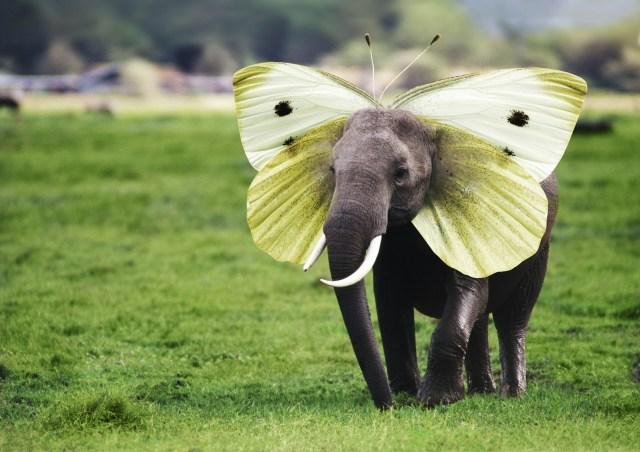 【芸術の秋】奇跡の動物『空想動物』に出会えるサイトが美麗すぎてステキ! 思わず記者も『空想動物』を創ってみた結果