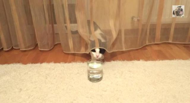 なんてことないコップのソーダにビビって振り回されるニャンコ