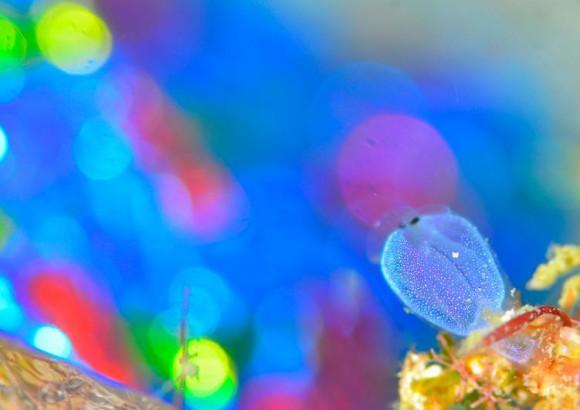 大阪・海遊館で開催中「海の中でもイルミネーション」が美しすぎる! ウミヒドラら小さな海の生物たちの魅力がいっぱい♪