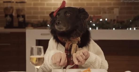 【すっとぼけた感じがたまらない】二人羽織でクリスマスディナーを楽しむワンコとニャンコ
