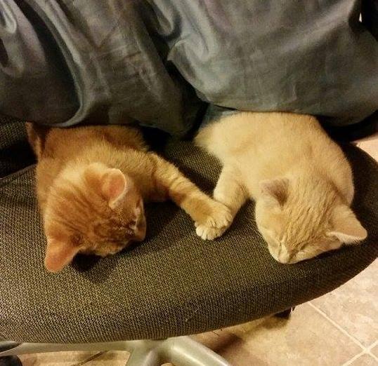【ラブラブ】お手手をしっかと重ね合わせてネンネする子猫たちの姿にキュン死寸前ッ!