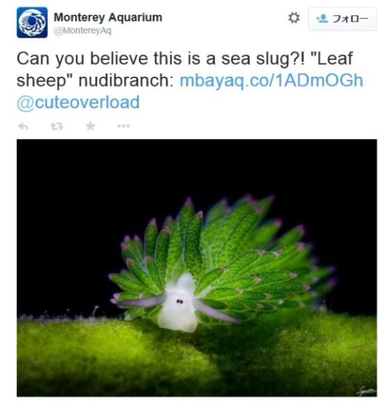 羊のショーンそっくりのウミウシが発見される! えぇーい、これはもう「ウミウシ」じゃなくて「ウミヒツジ」だわっ!!