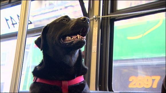 【賢いワンコ】たった1匹でバスに乗ってお出かけ! 独立心旺盛なわんこが話題に!
