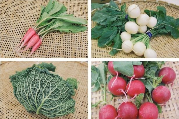 東日本大震災からもうすぐ丸4年……被災地宮城県の野菜を全国へ広める「みやベジ」プロジェクト
