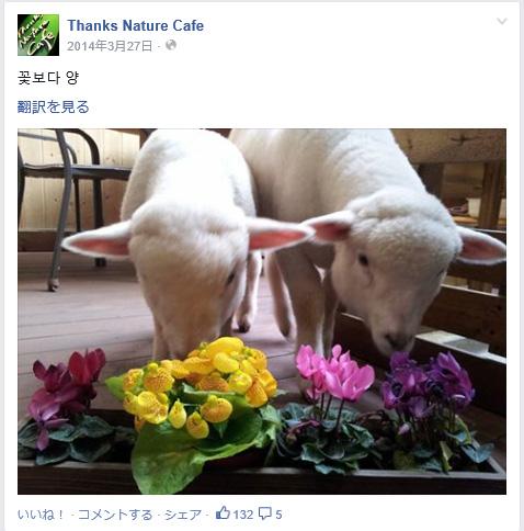 """もう可愛さがハンパない♪ 韓国にはモッフモフのこひつじに触れ合える""""羊カフェ""""があるらしい!"""