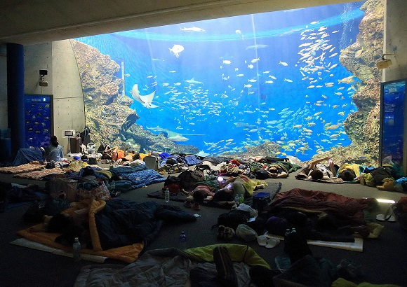 まるで夢みたい…海の生き物たちと水族館で一夜を過ごすナイトステイはいかが?