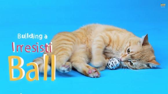 【にゃんこの為のDIY】超簡単!トイレットペーパーの芯で作るネコ用おもちゃ