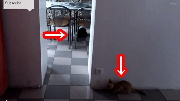 tomjellycat1