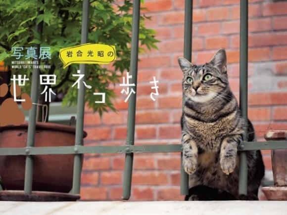 ニャンコと一緒に世界を旅しよう!! 「岩合光昭の世界ネコ歩き」写真展が東京・大阪で開催されるよっ