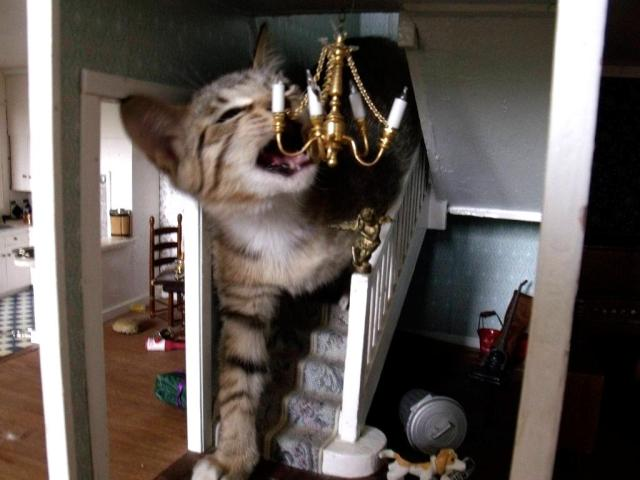 【巨大ネコ現る】ば、化け猫デタ〜ッ! と思ったら…ドールハウスでくつろぐニャンコでした