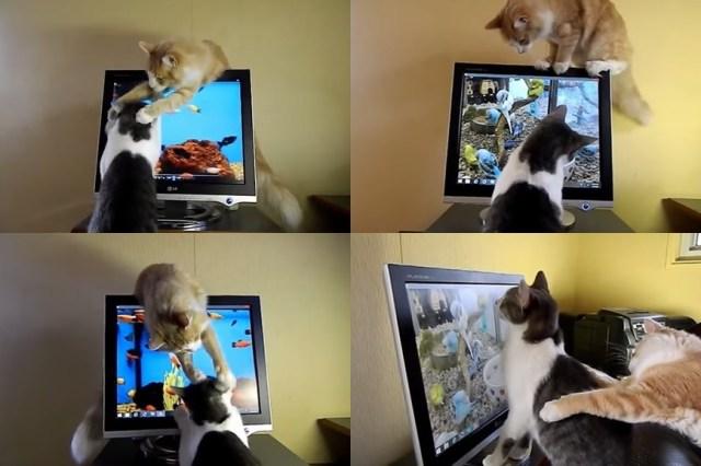 【かまってアピール】ゲームに夢中の兄弟ネコになんとかして遊んでもらおうと頑張るにゃんこ / ネットの声「Ctrl-Alt-Delの使い方教えてあげたい」