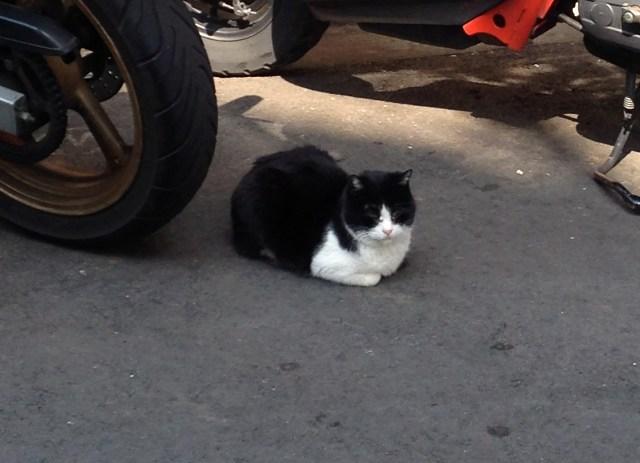 【リアルねこあつめ】何匹いるかな? Pouch編集部のご近所猫をウキウキウォッチング♪