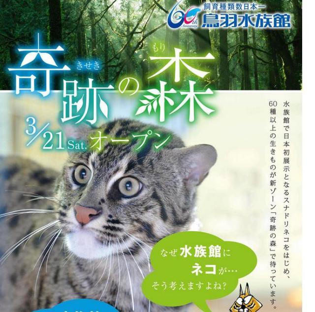 【3月21日から】鳥羽水族館の新ゾーン「奇跡の森」に、なぜかネコ科動物「スナドリネコ」さんが登場
