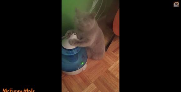【永遠の宿敵】「今日こそ成敗してくれるニャ!!!」加湿器vsネコの名勝負の数々をご覧あれ