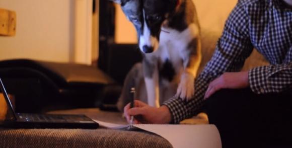 """【お邪魔虫犬】さんざん勉強の邪魔をした挙句「え? 勉強やめんの?」と""""ぽかん顔""""するシベリアンハスキーがかわいすぎる件"""