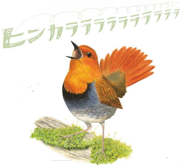 耳で楽しむバードウォッチング!!  日本野鳥の会が野鳥の声を集めた「鳴き声ノート」無料配布