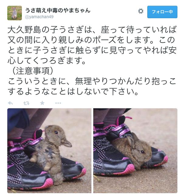 【萌え萌え】ナニコレかわいい! 靴の間にはまってくつろぐウサギ島の子うさぎちゃん