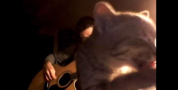 あまりにも自由すぎる!「ギター演奏を邪魔するネコ」やっぱり画面をおしりで独占するの巻