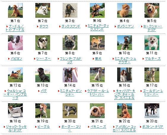 日本の人気犬種ランキング発表! 気になる1位は……やっぱりあの子だった!!