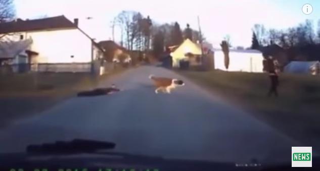 車を運転していたら……! 犬に引きずられた人が目の前を横断していったなり