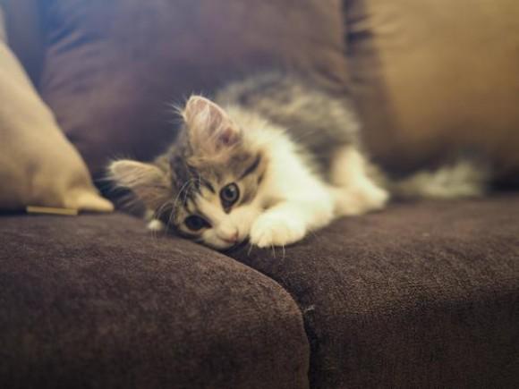 【オシャレ猫カフェ】池袋にオープンした「猫カフェMoCHA」がめちゃめちゃ居心地よさそう! 木のぬくもりあふれる癒し空間で子ネコを満喫♪
