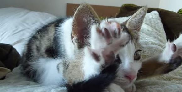【眠気注意】やわらかいにもほどがある!ヨガにゃんこのお昼寝前ストレッチ / ネコ「後ろ足ぐいーん」