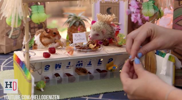 【ハムスター&ハリネズミ】キュートなバカンス動画! トロピカルなバーでひたすら飲みまくり!