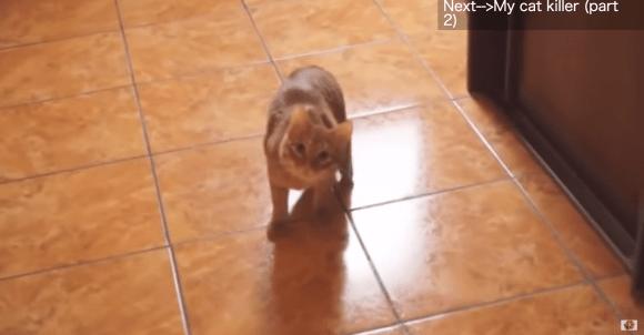 【ド迫力】動画「我が家のネコは殺人鬼」シリーズが怖すぎるよ〜!