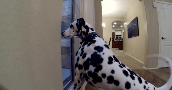 「おかえりぃいいい!」飼い主の帰宅を誰よりも喜んでくれるわんこたちの動画 3選