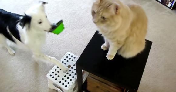 洗濯・片づけ・ネコのごはん……家事をぜ〜んぶやってくれるワンコがお利口すぎる!