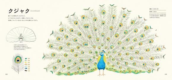 大人だからこそ楽しめる! イラストをサラリと描ける本「色えんぴつでかわいい鳥たち」が登場