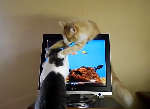 【兄弟あるある】弟ネコが画面をひっかくのをあらゆる手段で止めさせようとするお兄ちゃんネコのカワイイ戦い