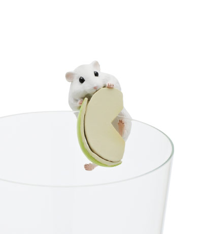 リンゴをかじったり逆さまになったり…コップのフチに「ハムスター」がちょこんとのるカプセルトイが激烈かわいい♪
