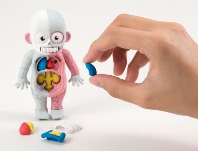 持ち運びにも便利!? 可愛くって意外と難しい「理科室の模型復元パズル 人体模型/ウシ模型」7月上旬に発売
