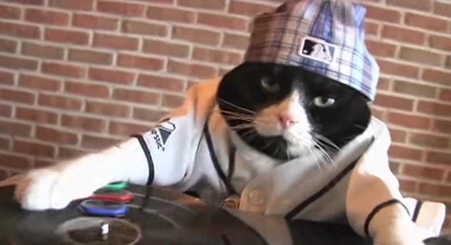 【キメ顔注意】DJ Kitty イン・ザ・ハーーウス! ノリノリでターンテーブルを回すニャンコさんを発見したなり