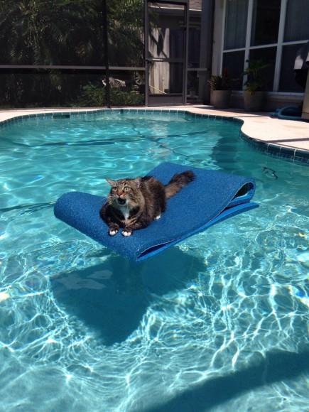 「ふざけんじゃニャいわよぉぉぉ!!!」プールに浮いているネコの顔がマジでキレておる