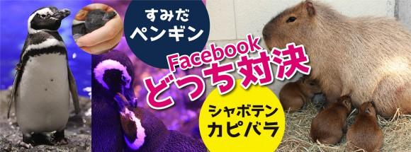 すみだペンギンと伊豆のカピバラ、どっちが可愛い? 水族館 VS シャボテン公園「いいね!」対決が6月6日開催/勝者は相手のFacebookをジャック!