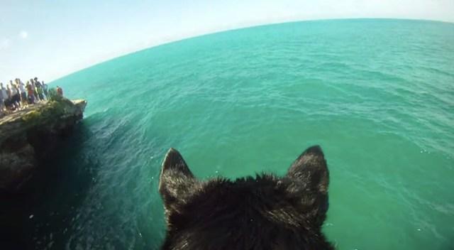 ワンコになった気分で海へダーーーイブ! 風を感じてスリル満点な「ヒヤッ」とする動画のご紹介♪