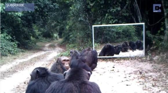 野生の動物が鏡で自分の姿を見てみたら? どんな反応を示すかがわかる実験動画がおもしろい!
