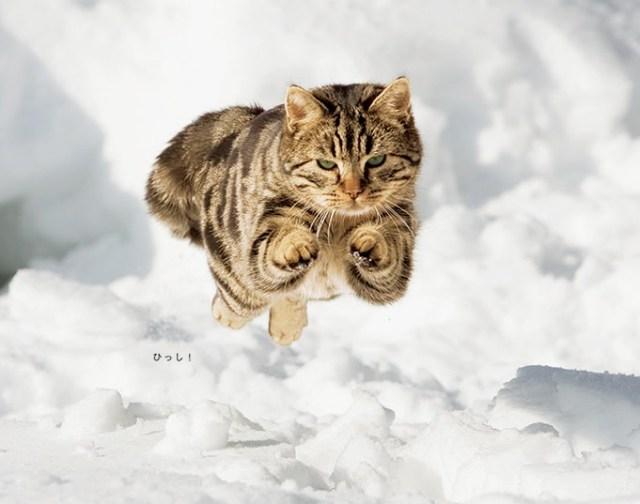 【ジワジワ&癒やし】写真集『とびます! とびます! 』刊行! 海の動物から陸の動物までみーんな跳んでるよ!!
