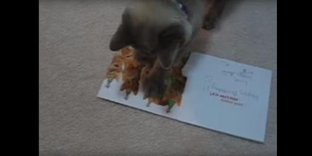 「この曲者め! 成敗してくれるニャ!!!」友人にもらった誕生日カードにネコがマジギレ! そのワケは?