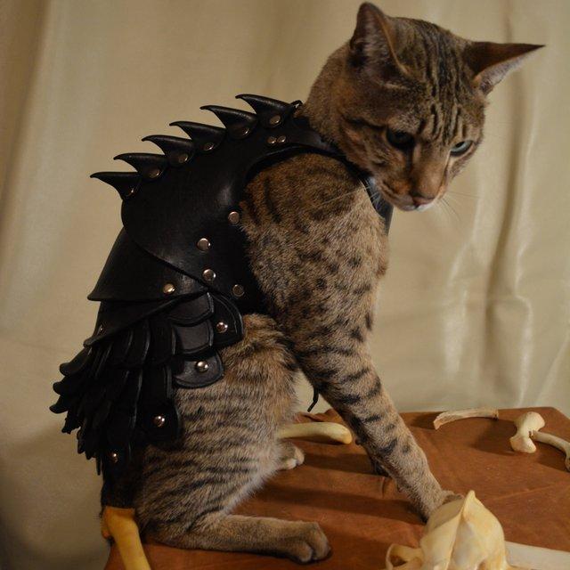 【マッドマックスっぽい】愛猫をヘビーメタル風に武装させるお洋服を発見ッ! これで悪い虫もつかないゾ!?