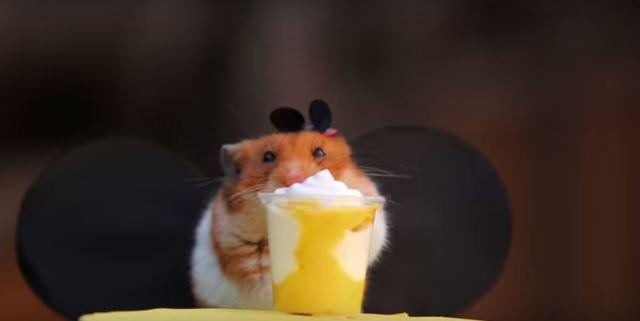 遊びながらずっとモグモグ食べっぱなし…ハムスターくんがミニサイズのディズニー・ワールドを大満喫する動画
