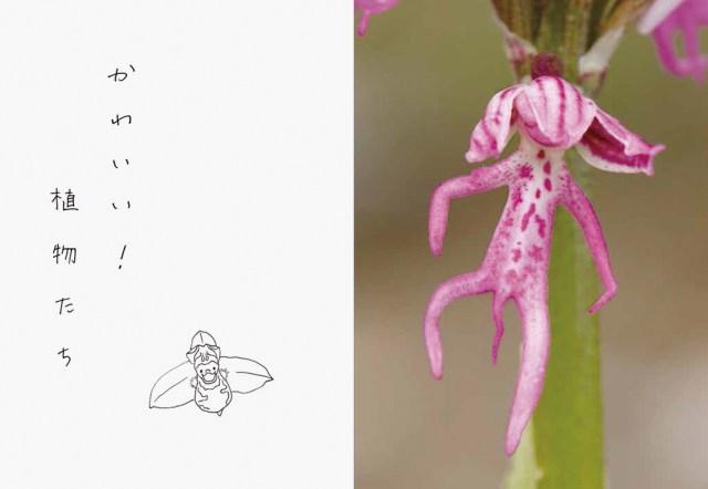 なんじゃこりゃああ! じ~っと凝視してしまう『へんてこりんな植物』な図鑑がかなりエキセントリックな件