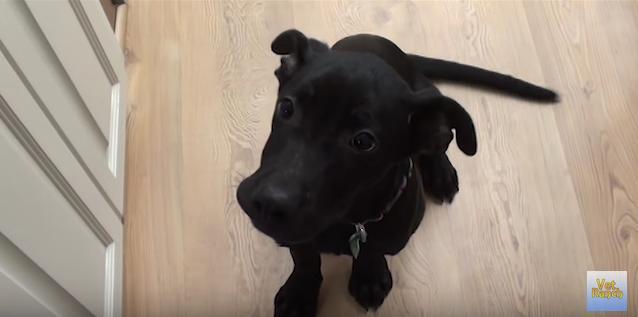 【優しい世界】病気にかかってボロボロだった幼い子犬「クリスティー」……彼女に訪れた劇的な出会いと変化とは?